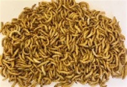 Mealworms Regular 500g Monthly - SUPERSAVER
