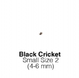 Black Crickets Small 1 Tub of 225-250 Size 2 4-6mm