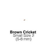 Banded Crickets Small Tub of 225-275 Size 2 5-8mm