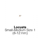 Locusts SmallMedium