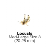 Locust Medium Large - 1 Tub of 12 Size 3 20-28mm