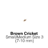Silent Crickets Small Medium MAXIPACK of 250 Size 3 6-10mm