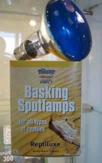 Basking Spot Lamp Daylight 60w