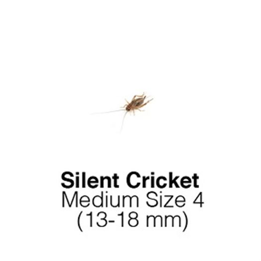 Silent Crickets Medium Sack of 500 Size 4 13.-18mm