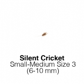 Silent Crickets Small /Medium Tub of 125-150 Size 3 6-10mm
