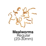 Small Regular Mealworms Supersaver