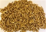 Mealworms Regular 250g Weekly - SUPERSAVER