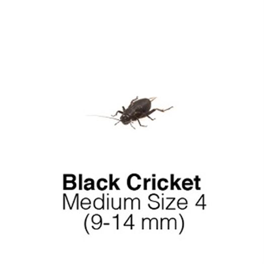 Black Crickets Medium Sack of 500 Size 4 9-14mm