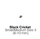 Black Crickets Sm/Med 1 Tub of 125-150 Size 3 6-10mm