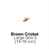 Banded Crickets Large 1Tub of 100-125 Size 5 14-18mm