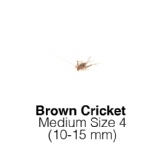 Banded Crickets Medium 1 Tub 125-175 Size 4 10-15mm