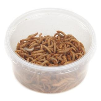 Mealworms Regular Wildbirds 6 Tubs x 40g