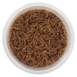 Wild Bird Mini Mealworms