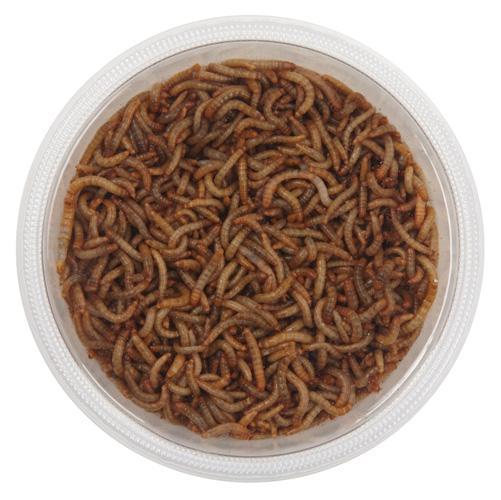 mealworms mini wildbirds 6 tubs x 40g livefoods direct ltd. Black Bedroom Furniture Sets. Home Design Ideas
