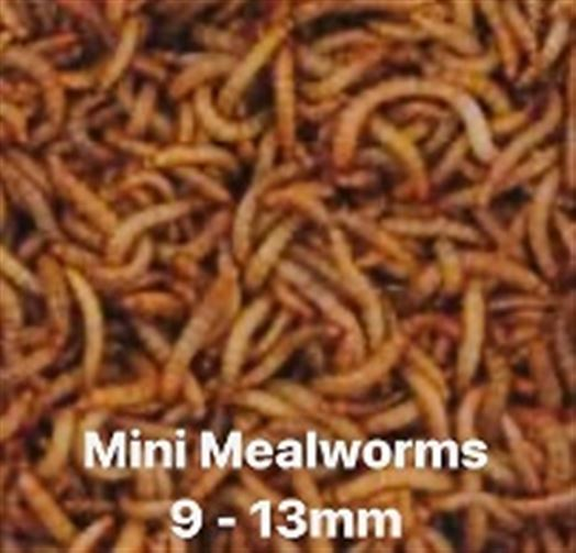 Mealworms Mini Bat Pack - 250g