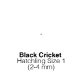 Black Crickets Hatch - MAXIPACK of 1000 Size 1 2-4mm