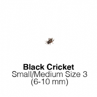 Black Crickets Small/ Med - MAXIPACK of 250 Size 3 6-10mm