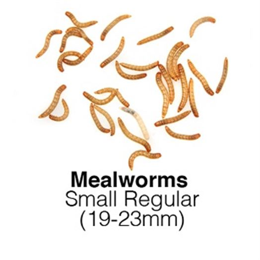 Mealworms Small Regular Sack of 1kg 19-23mm